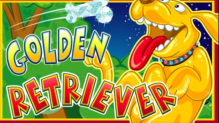 Golden Retriever 61